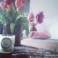 classicmaisoncandle,lindenanddarkmoss